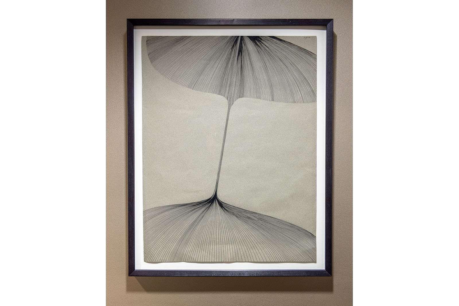 Dorothy Hood, Brancusi's Flower, 1972. Ink on paper. Photo by Nash Baker.