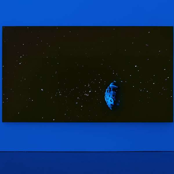 Diana Thater, The Starry Messenger, 2014. Courtesy the artist and David Zwirner, New York/London